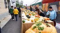 Выставка тыквы в Пьоццо